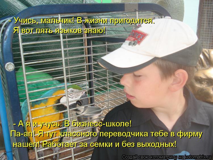 Котоматрица: - Учись, мальчик! В жизни пригодится. Я вот пять языков знаю!  - А я и учусь. В бизнесс-школе!   Па-ап! Я тут классного переводчика тебе в фирму   н