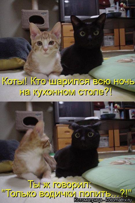 """Котоматрица: Коты! Кто шарился всю ночь на кухонном столе?! Ты ж говорил: """"Только водички попить...?!"""""""