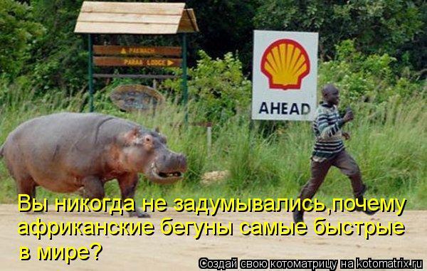 Котоматрица: Вы никогда не задумывались,почему африканские бегуны самые быстрые в мире?
