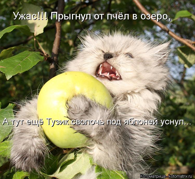 Котоматрица: Ужас!!! Прыгнул от пчёл в озеро, А тут ещё Тузик сволочь под яблоней уснул...