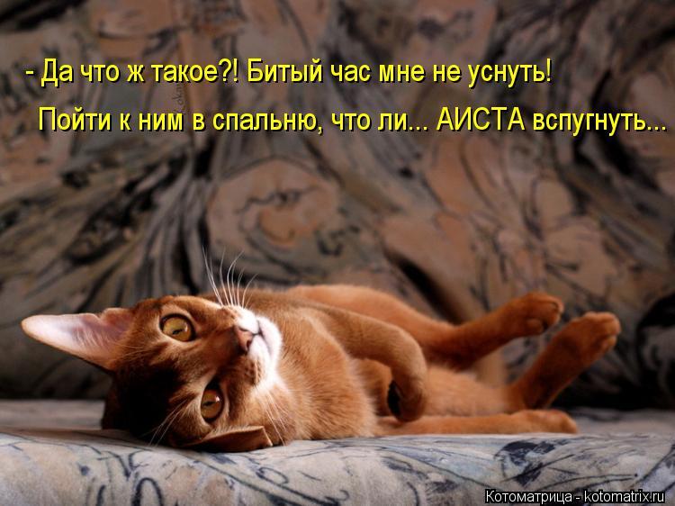 Котоматрица: - Да что ж такое?! Битый час мне не уснуть! Пойти к ним в спальню, что ли... АИСТА вспугнуть...