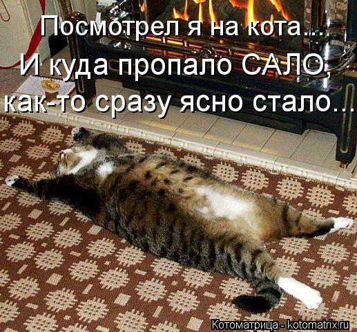 Котоматрица: Посмотрел я на кота... И куда пропало САЛО, как-то сразу ясно стало...