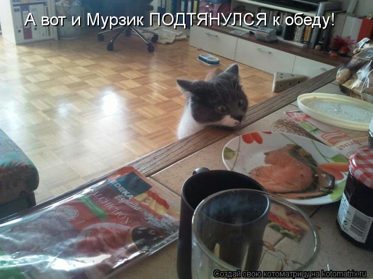 Котоматрица: А вот и Мурзик ПОДТЯНУЛСЯ к обеду!