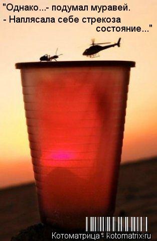 """Котоматрица: """"Однако...- подумал муравей.  - Наплясала себе стрекоза состояние..."""""""