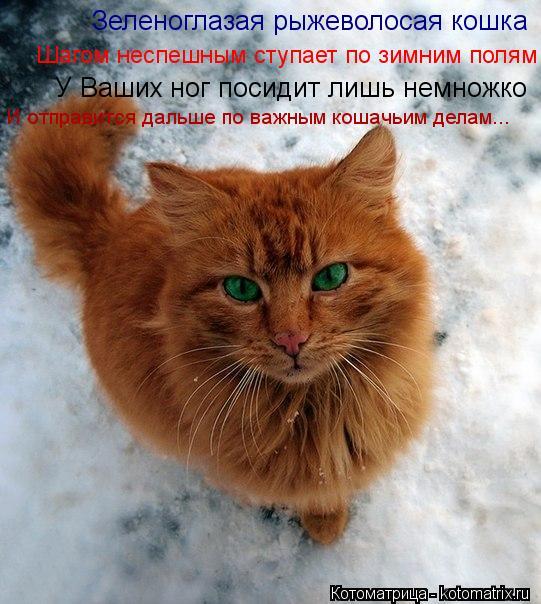 Котоматрица: Зеленоглазая рыжеволосая кошка У Ваших ног посидит лишь немножко Шагом неспешным ступает по зимним полям И отправится дальше по важным ко