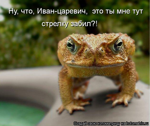 Котоматрица: Ну, что, Иван-царевич,  это ты мне тут стрелку забил?!