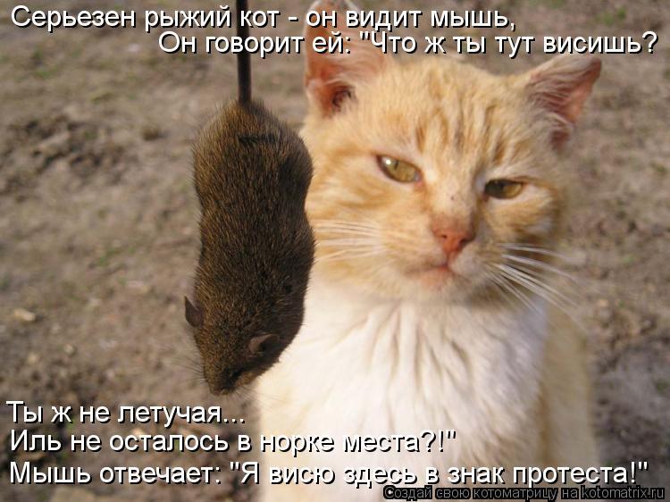 """Котоматрица: Серьезен рыжий кот - он видит мышь, Он говорит ей: """"Что ж ты тут висишь? Ты ж не летучая... Иль не осталось в норке места?!"""" Мышь отвечает: """"Я висю"""