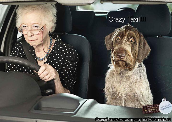 Котоматрица: Crazy Taxi!!!!