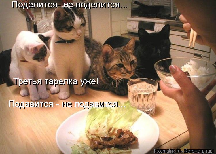 Котоматрица: Поделится- не поделится...  Подавится - не подавится... Третья тарелка уже!