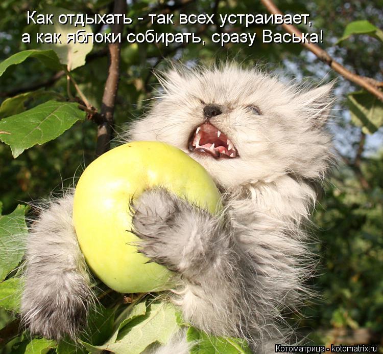Котоматрица: Как отдыхать - так всех устраивает, а как яблоки собирать, сразу Васька!