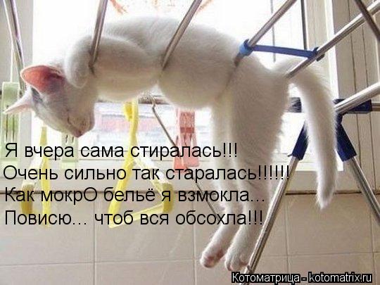 Котоматрица: Я вчера сама стиралась!!! Очень сильно так старалась!!!!!! Как мокрО бельё я взмокла... Повисю... чтоб вся обсохла!!!