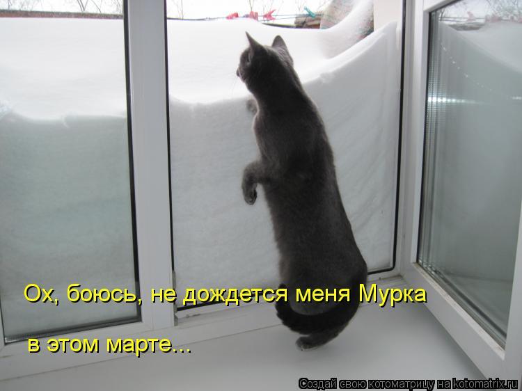 Котоматрица: Ох, боюсь, не дождется меня Мурка в этом марте...