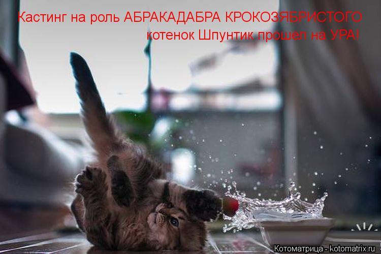 Котоматрица: Кастинг на роль АБРАКАДАБРА КРОКОЗЯБРИСТОГО котенок Шпунтик прошел на УРА!