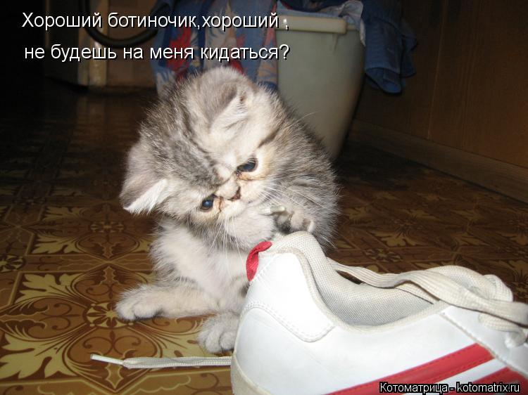 Котоматрица: Хороший ботиночик,хороший , не будешь на меня кидаться?