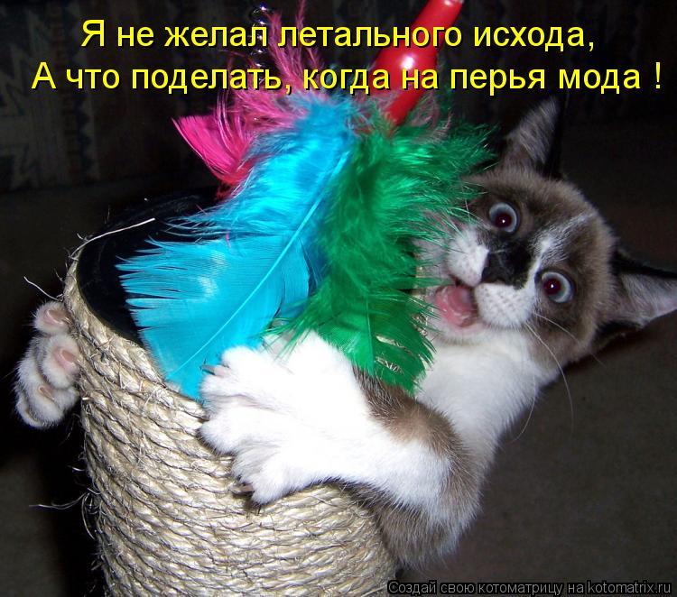 Котоматрица: Я не желал летального исхода, А что поделать, когда на перья мода !