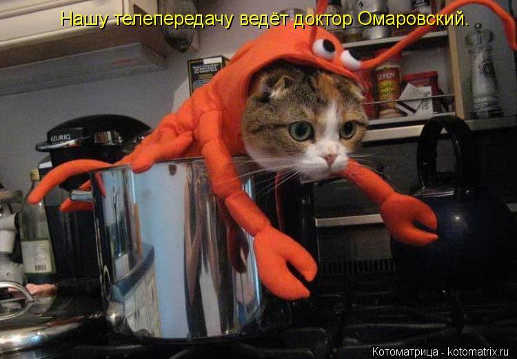 Котоматрица: Нашу телепередачу ведёт доктор Омаровский.