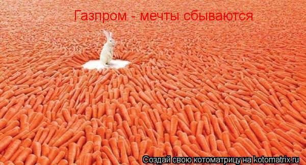 Котоматрица: Газпром - мечты сбываются