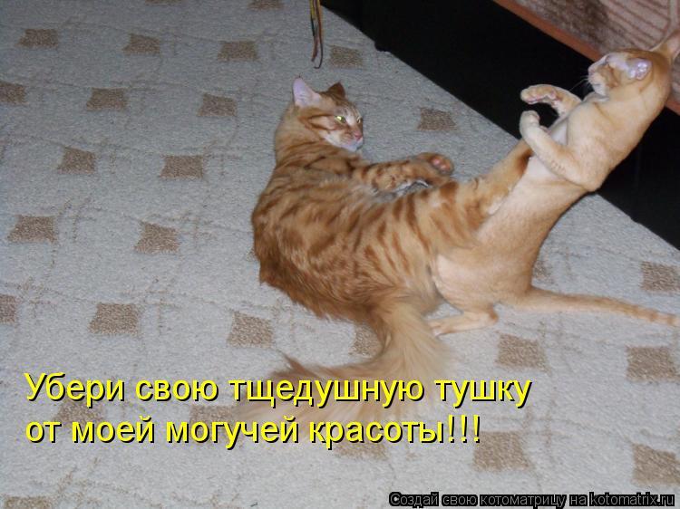 Котоматрица: Убери свою тщедушную тушку от моей могучей красоты!!!