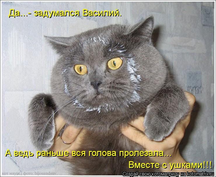 Котоматрица: Да...- задумался Василий. А ведь раньше вся голова пролезала... Вместе с ушками!!!