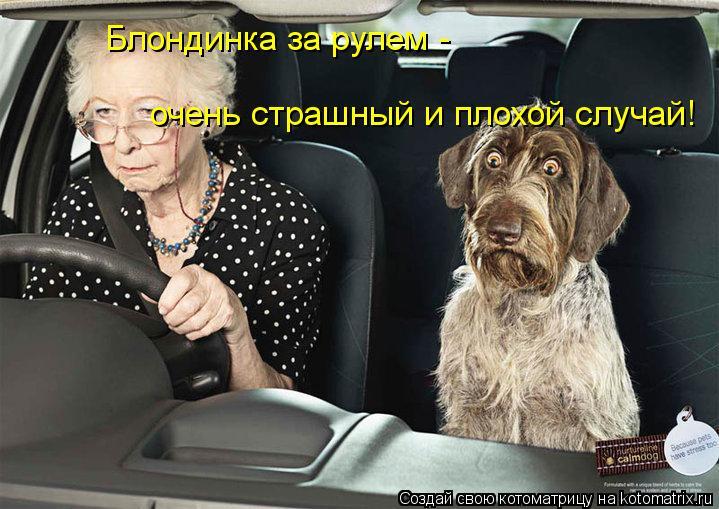 Котоматрица: Блондинка за рулем -  очень страшный и плохой случай!