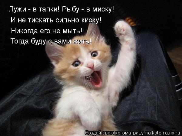 Котоматрица: Лужи - в тапки! Рыбу - в миску! И не тискать сильно киску! Никогда его не мыть! Тогда буду с вами жить!