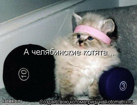Котоматрица: А челябинские котята...