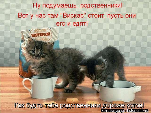 """Котоматрица: Ну подумаешь, родственники! Вот у нас там """"Вискас"""" стоит, пусть они его и едят! Как будто тебе родственники дороже котов!"""