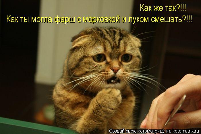 Котоматрица: Как же так?!!!  Как ты могла фарш с морковкой и луком смешать?!!!
