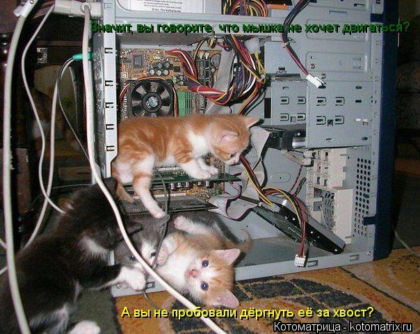Котоматрица: Значит, вы говорите, что мышка не хочет двигаться? Значит, вы говорите, что мышка не хочет двигаться? А вы не пробовали дёргнуть её за хвост?
