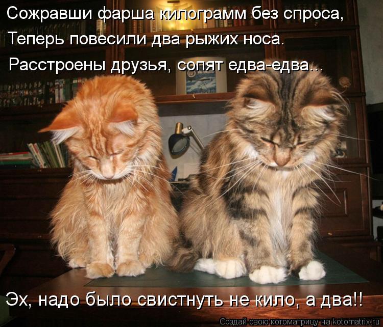 Котоматрица: Теперь повесили два рыжих носа. Расстроены друзья, сопят едва-едва... Эх, надо было свистнуть не кило, а два!! Сожравши фарша килограмм без спр