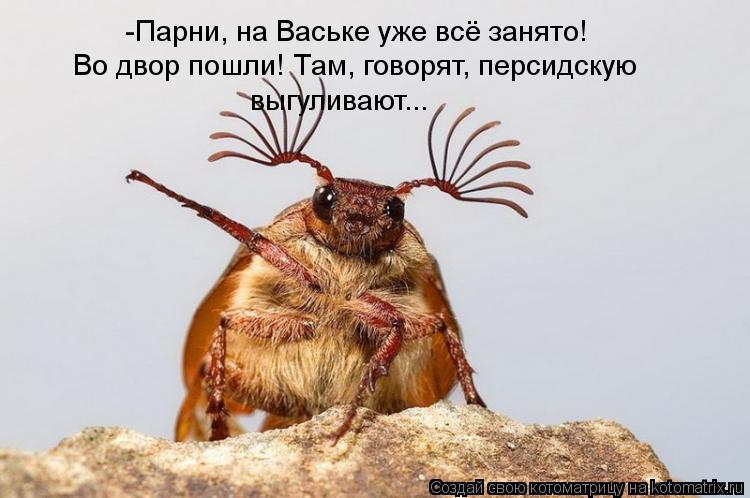 Котоматрица: -Парни, на Ваське уже всё занято! Во двор пошли! Там, говорят, персидскую  выгуливают...