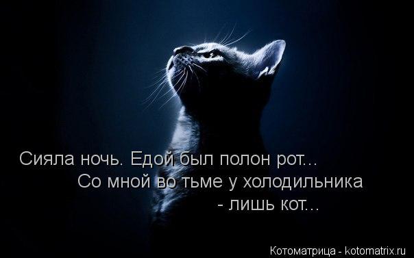 Котоматрица: Сияла ночь. Едой был полон рот... Со мной во тьме у холодильника - лишь кот...
