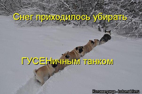 Котоматрица: Снег приходилось убирать ГУСЕНичным танком