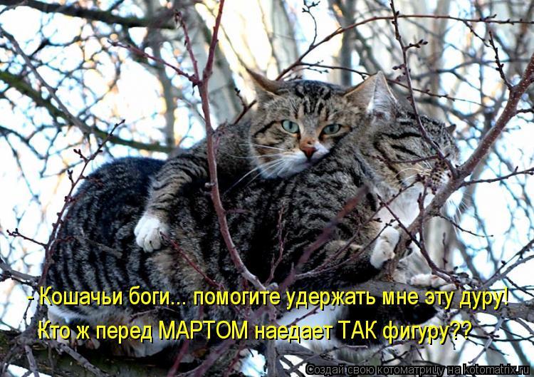 Котоматрица: - Кошачьи боги... помогите удержать мне эту дуру! Кто ж перед МАРТОМ наедает ТАК фигуру??