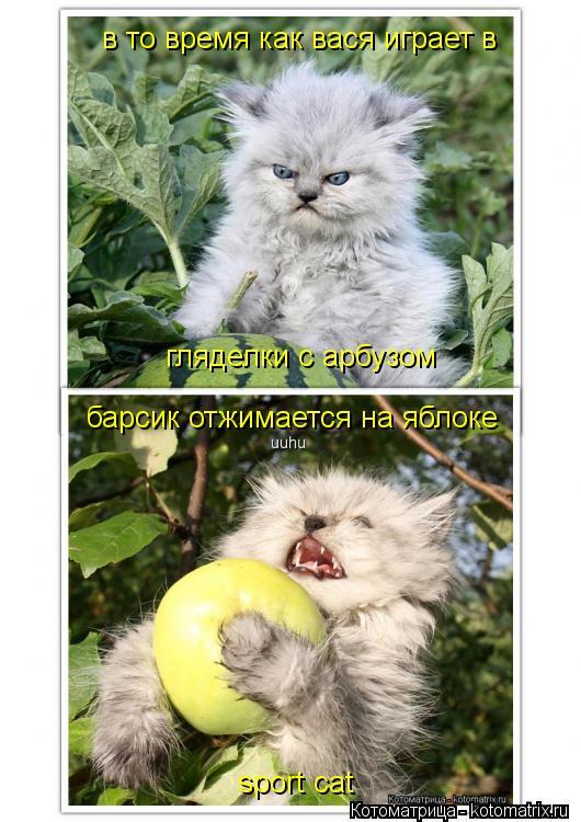 Котоматрица: в то время как вася играет в  гляделки с арбузом барсик отжимается на яблоке sport cat