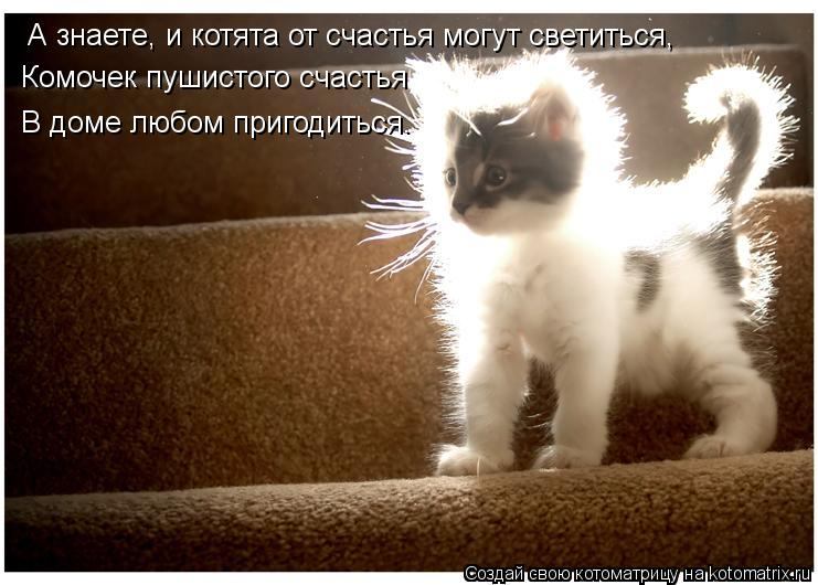 Котоматрица: А знаете, и котята от счастья могут светиться, Комочек пушистого счастья В доме любом пригодиться.