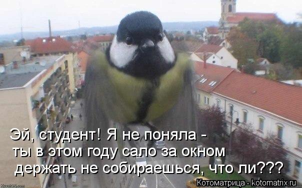 Котоматрица: Эй, студент! Я не поняла -  ты в этом году сало за окном  держать не собираешься, что ли???