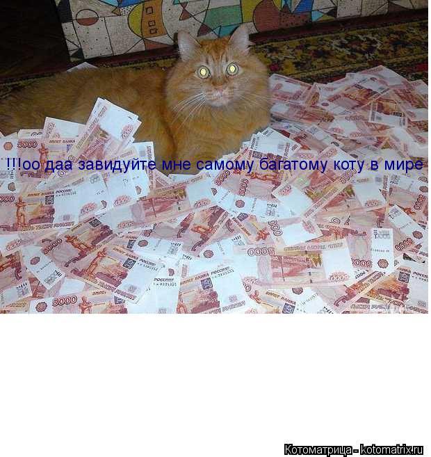 Котоматрица: !!!оо даа завидуйте мне самому багатому коту в мире