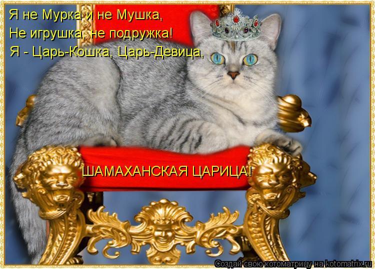 Котоматрица: Я - Царь-Кошка, Царь-Девица, Не игрушка, не подружка! Я не Мурка и не Мушка, ШАМАХАНСКАЯ ЦАРИЦА!