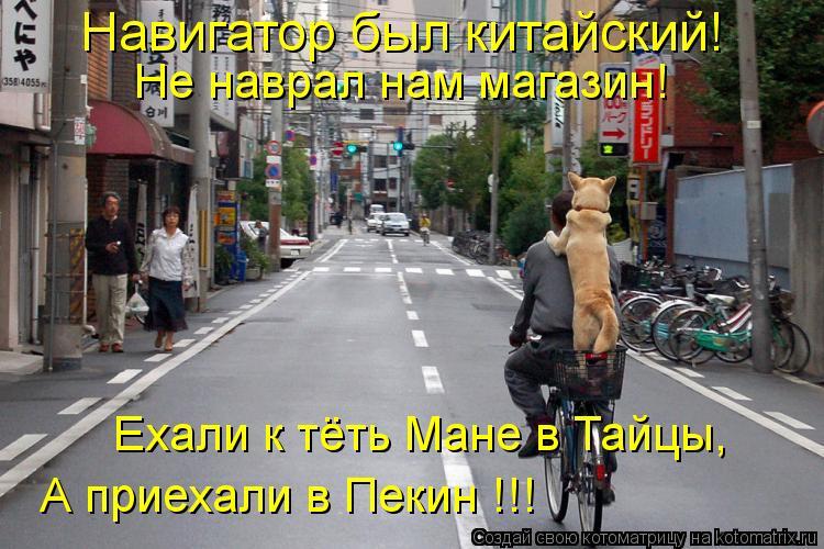 Котоматрица: Не наврал нам магазин! Ехали к тёть Мане в Тайцы, А приехали в Пекин !!! Навигатор был китайский!
