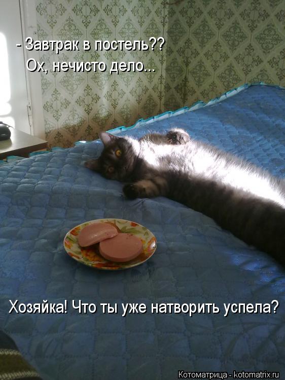Котоматрица: - Завтрак в постель?? Ох, нечисто дело... Хозяйка! Что ты уже натворить успела?