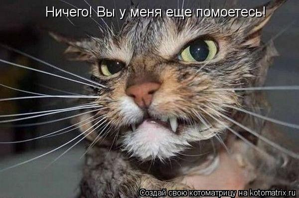 Котоматрица: Ничего! Вы у меня еще помоетесь!