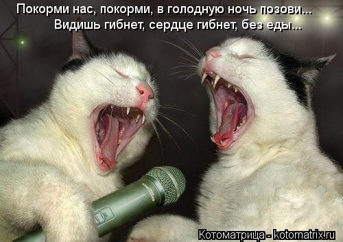 Котоматрица: Покорми нас, покорми, в голодную ночь позови... Видишь гибнет, сердце гибнет, без еды...