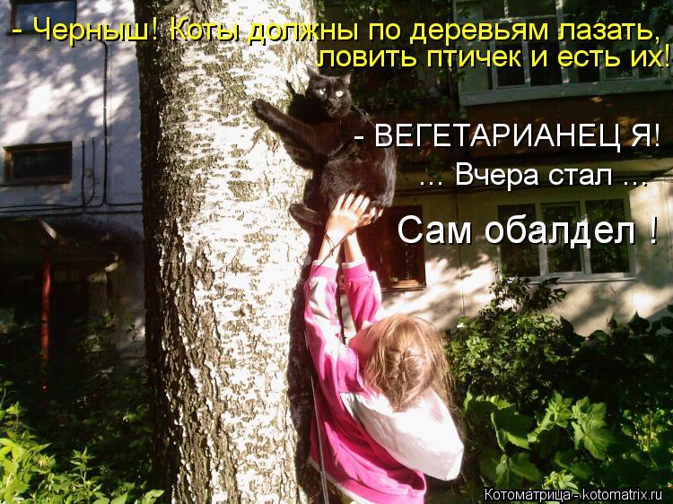 Котоматрица: - Черныш! Коты должны по деревьям лазать, ловить птичек и есть их! - ВЕГЕТАРИАНЕЦ Я! ... Вчера стал ... Сам обалдел !