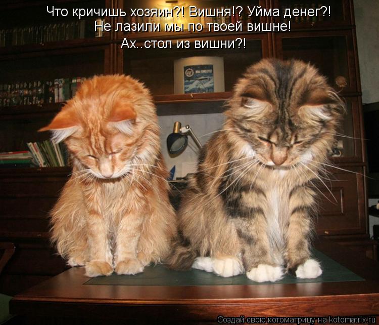 Котоматрица: Что кричишь хозяин?! Вишня!? Уйма денег?! Ах..стол из вишни?!  Не лазили мы по твоей вишне!