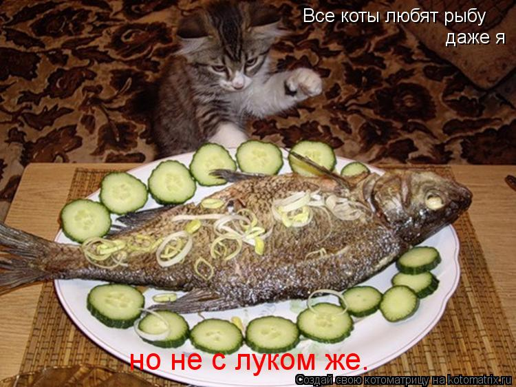 Котоматрица: Все коты любят рыбу даже я но не с луком же.