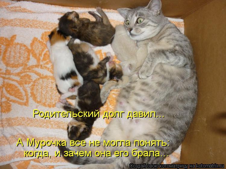 Котоматрица: Родительский долг давил... А Мурочка все не могла понять: когда, и зачем она его брала...