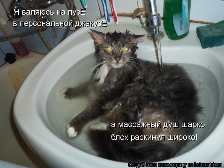 Котоматрица: Я валяюсь на пузЕ в персональной джакузЕ а массажный душ шарко блох раскинул широко!