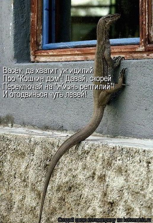 """Котоматрица: Васёк, да хватит уж идилий Про """"Кошкин дом""""! Давай, скорей Переключай на """"Жизнь рептилий""""! И отодвинься чуть левей!"""