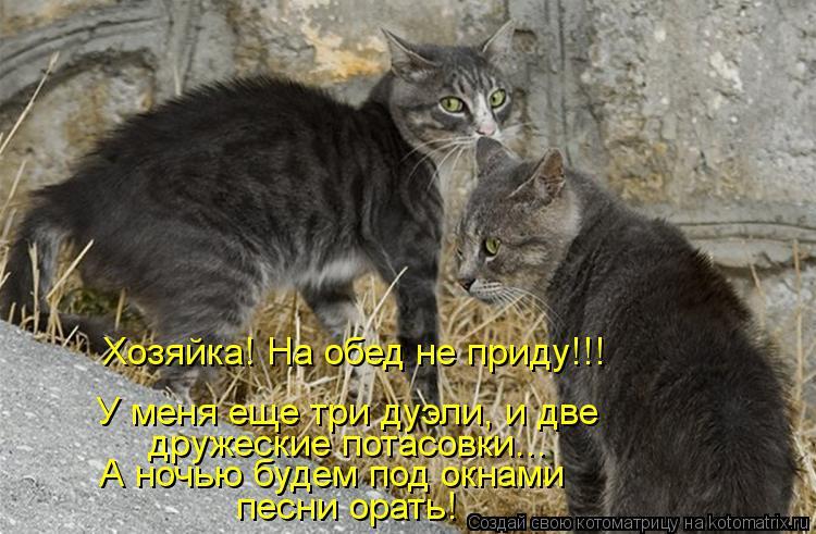 Котоматрица: Хозяйка! На обед не приду!!! А ночью будем под окнами песни орать! дружеские потасовки... У меня еще три дуэли, и две